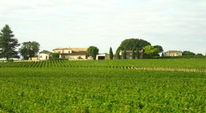 Vineyards in Bordeaux region of France
