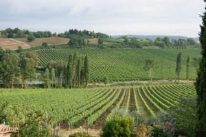 Tuscany grapes and hillside