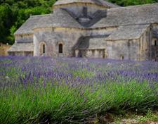 Senanque Abbey, Provence, Lavender fields